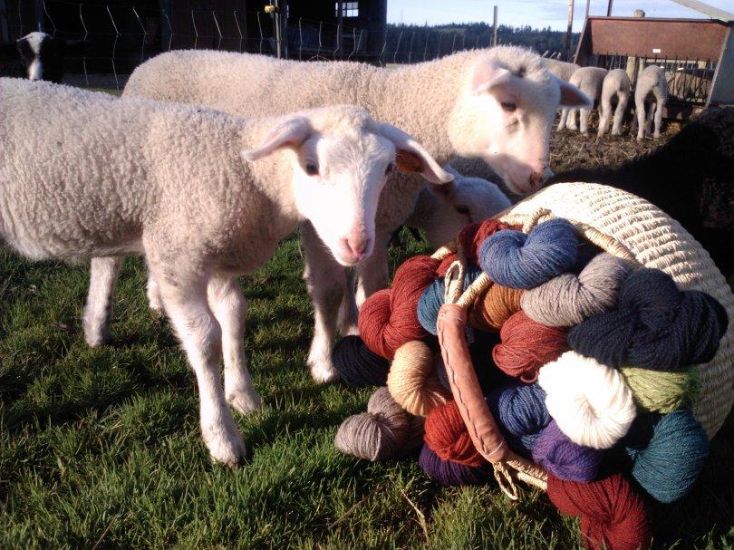 lambs_wool
